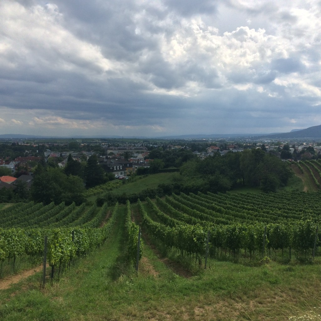 Vineyards Outside Baden Bei Wien, Austria